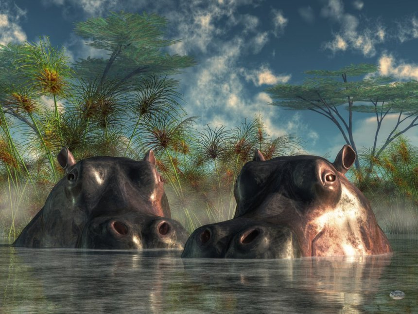September 2015, Hippos are Coming to Get You by Daniel Eskridge; for more information, visit http://daniel-eskridge.artistwebsites.com/featured/hippos-are-coming-to-get-you-daniel-eskridge.html