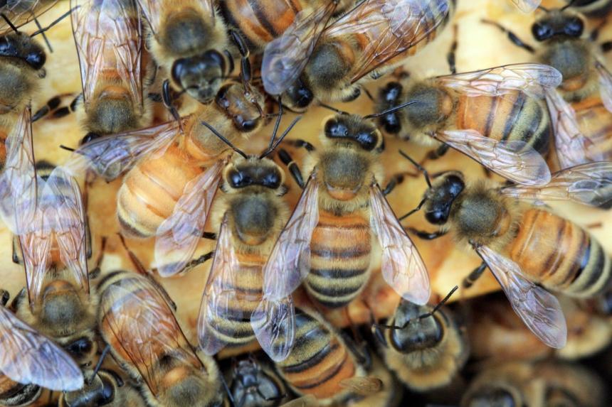Honeybees by  Julie van der Wekken; for more information, visit www.lensmatterphotography.com