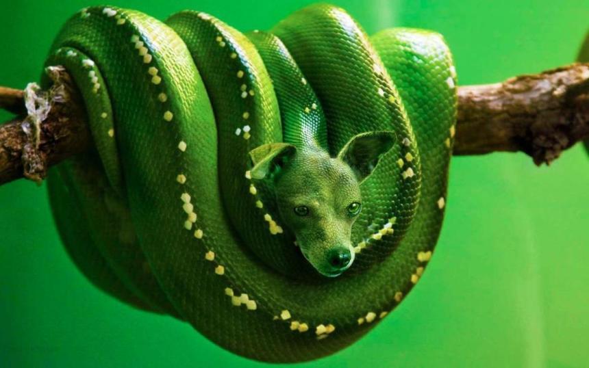 """December 2014, """"Green Bark Python"""" by Sarah DeRemer; for more information, visit www.sarahderemer.com"""