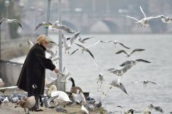 """She is Feeding the Birds"" by Gilles San Martin"