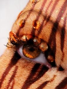 Tiger Eye by Holly Tillman; for more information, visit http://holly6669666.deviantart.com/