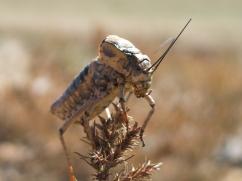 """Crickets"" by Kristinn Ingi Thorarinsson; for more information, visit http://kiddiingi.deviantart.com/"