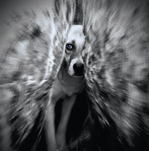 """""""Don't Hurt Me"""" by  Gizem Cimen; for more information, visit  http://cimengizem.deviantart.com/"""
