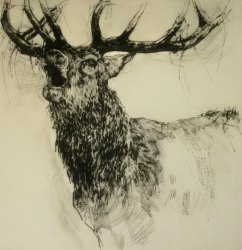 """Bellowing Stag"" by Emerson Mayes; for more information, visit  http://www.emersonmayes.co.uk/"