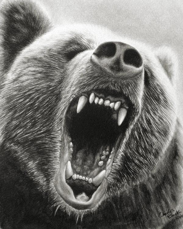 The bear i got for christmas essay
