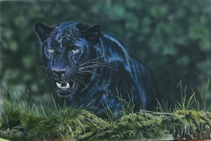 """Black Panther"" by Paul Hawkyard; for more information, visit https://www.facebook.com/pages/Paul-Hawkyard-Wildlife-Artist/106364439463463"