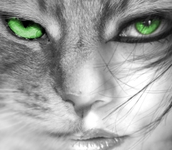 Feline by Phill-P; for more information, visit  http://phill-p.deviantart.com/