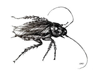 Cockroach by Linda A. Fraine; for more information, visit https://www.etsy.com/shop/Linsartwork