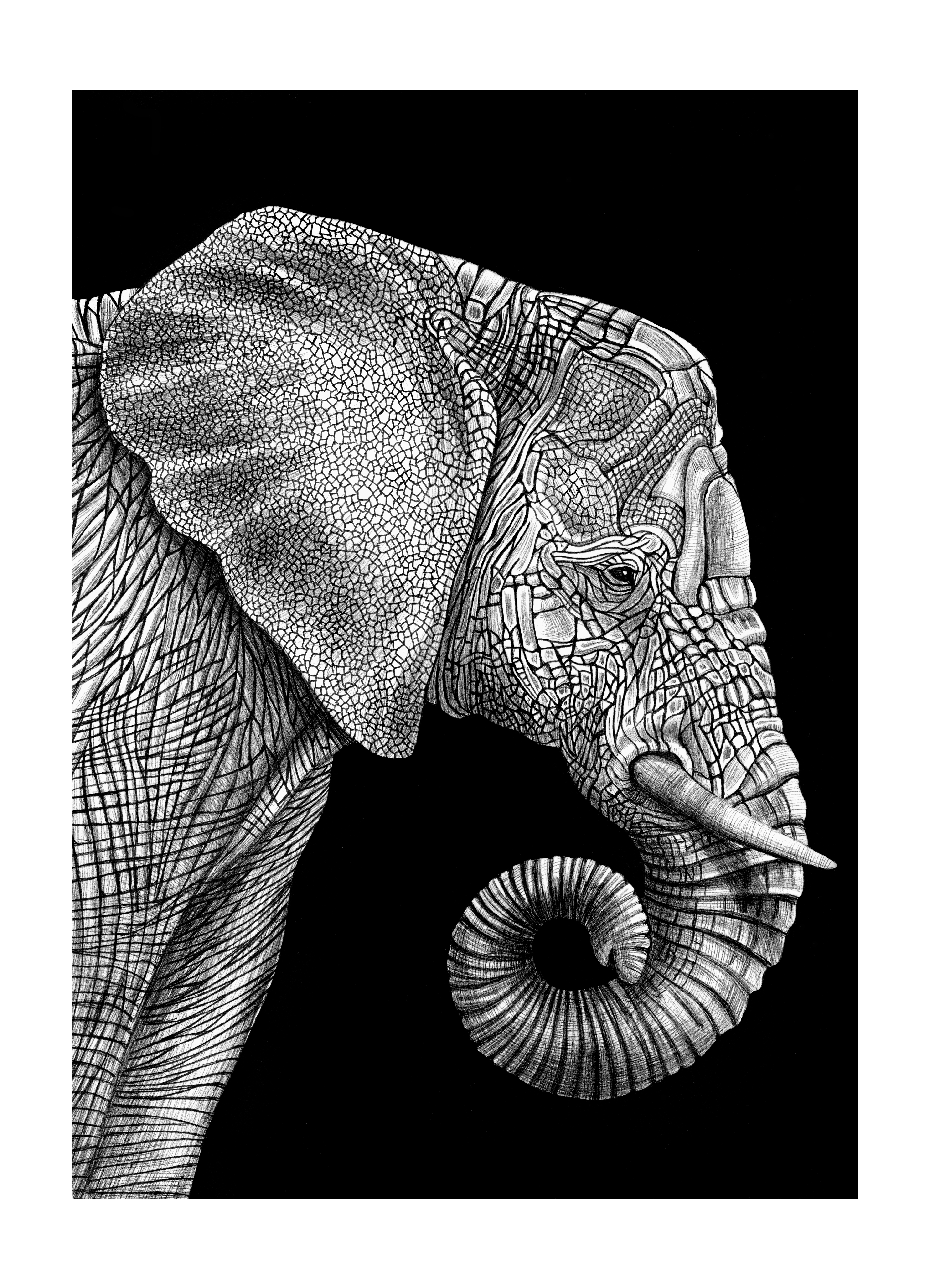 essay animal a beast of a literary magazine essay elephant by tim jeffs for more information