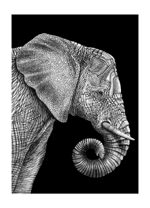 Elephant by Tim Jeffs; for more information, visit https://www.etsy.com/shop/TimJeffsArt