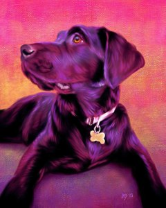 Chocolate Labrador by Iain McDonald; for more information, visit www.ScottieInspired.Etsy.com